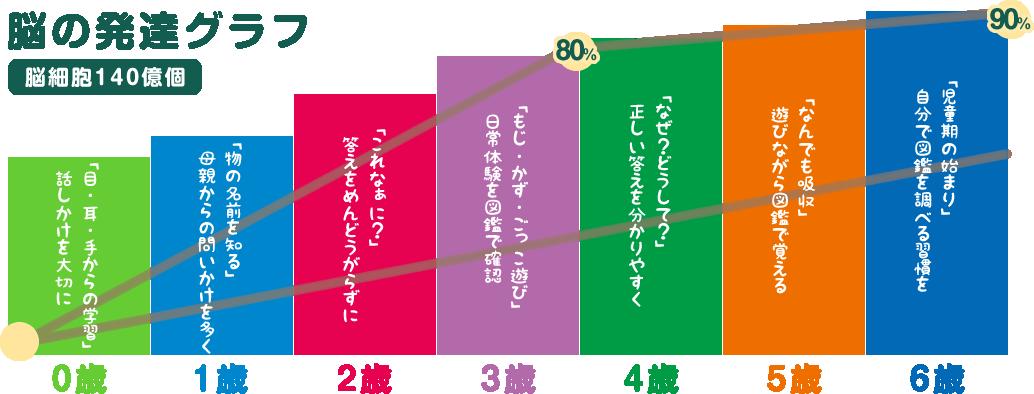 脳の発達グラフ